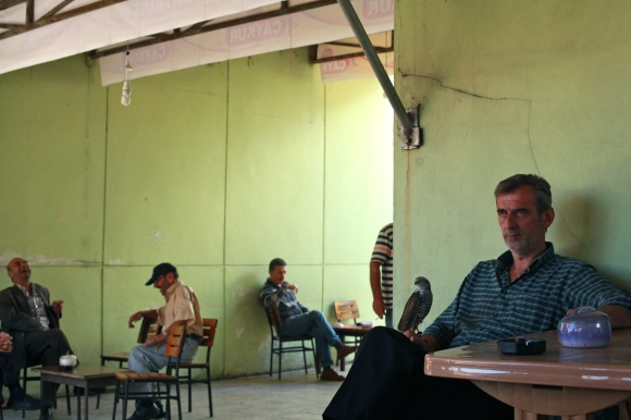 The falconers' cafe in Çayeli.
